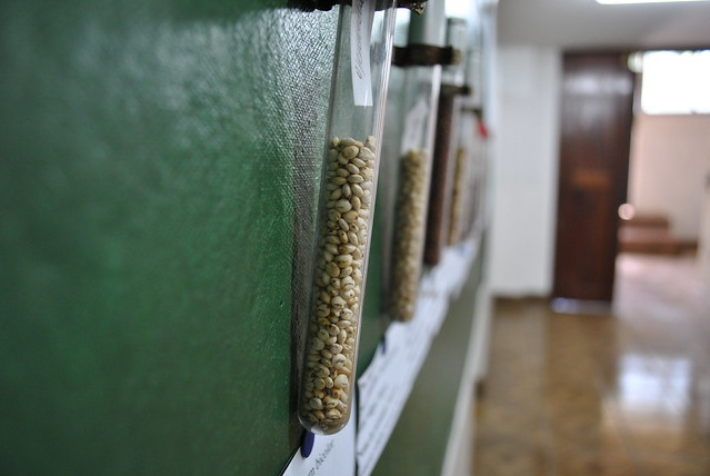 Test Tubes of Sorghum Seeds