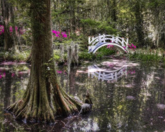 Magnolia Gardens Charleston Sc Bridge 2 Flickr Photo Sharing