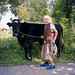 Bringing back the cows by ted.kozak