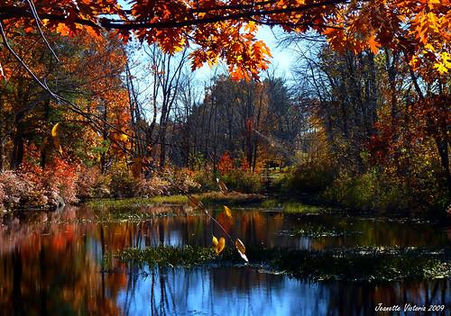 autumn water fallcolors newhampshire fallfoliage rindgenh thebestofcengizsqueezeme2groups reflectionslovers jeanetterunyon lillysonthepondrestaurant