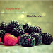 Raspberries and Blackberries.... by claire.s22