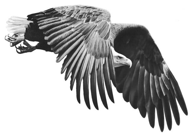 Eagle Wings Drawings on Eagle's Wings Wip