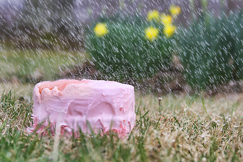 someone left the cake out in the rain