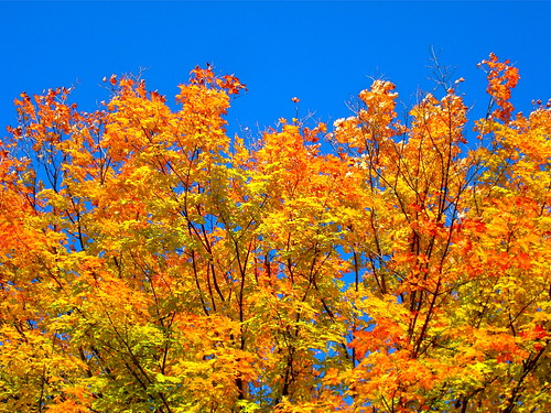 glorious colors of Autumn