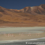 Laguna Charcota - Salar Tour, Bolivia