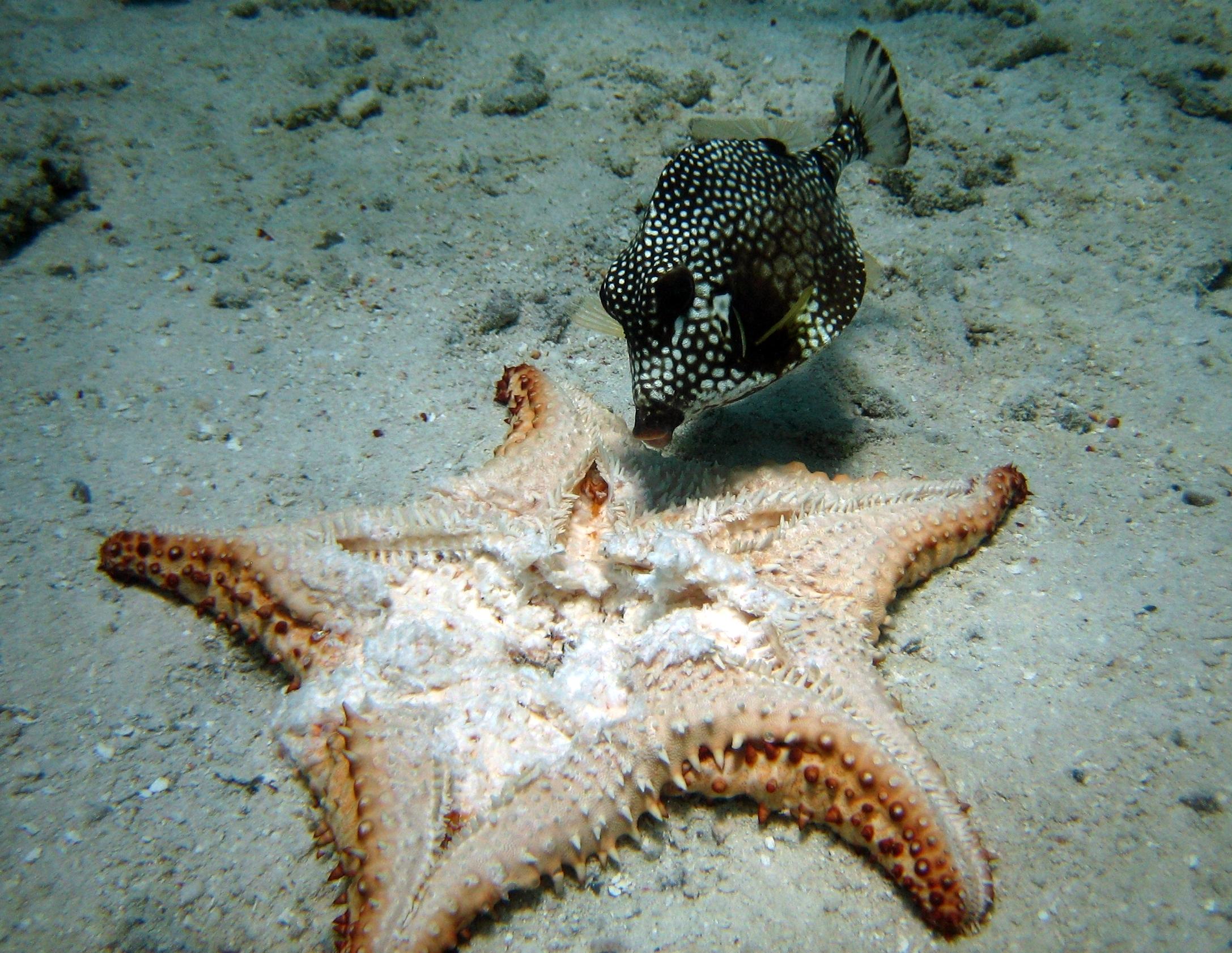 smooth trunkfish eatin... Ryan Phillippe