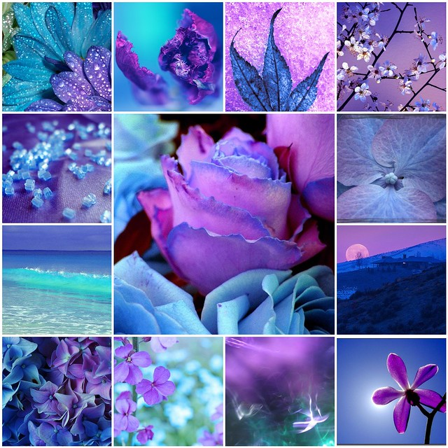 Purple collage a gallery on flickr - Purple and blue combination ...