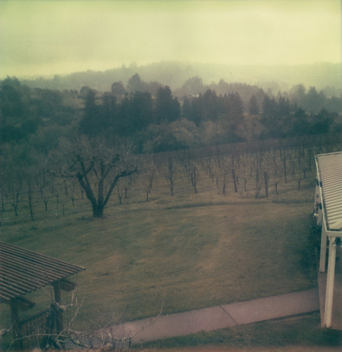film polaroid sx70 vineyard view hill expired sebastopol furlong atz