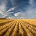 Harvest by Sheldon Nalos