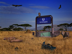 Serengeti Underground Station had been built to accommodate the rising interest in safari tours for backpackers. The Minister for Tourism was sure that cheap transport would go a long way towards improving foreign exchange earnings.