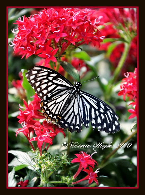 Butterfly Jungle San Diego Flickr Photo Sharing