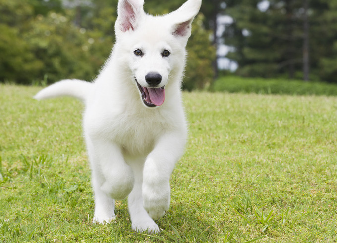 HD Pictures Of Puppies