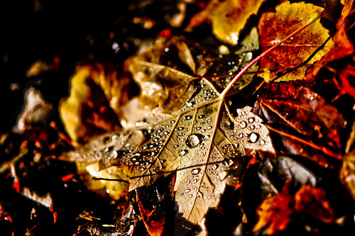 dew covered fall leaves