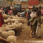 Sheep Section - Saquisili, Ecuador