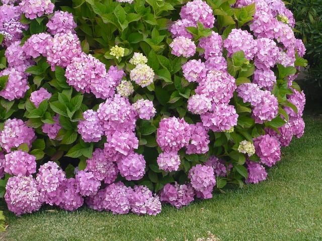 imagens jardins lindos:Os jardins à beira-mar são lindos, bem cuidados e floridos