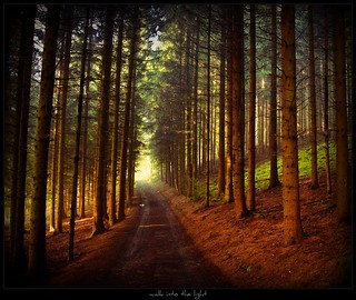 Weg bei Erbland - walk into the light