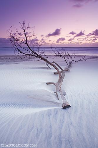 ocean morning pink seascape beach clouds sunrise canon landscape dawn coast twilight sand waves purple chad tide australia pacificocean nsw newsouthwales canon5d sands canonef1740mmf4lusm solomon 2010 goldcoast iso50 texutre chadsolomon tweetcoast