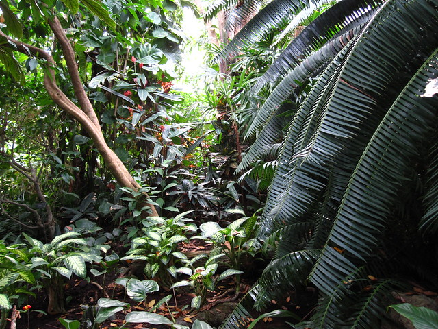 The Tropical Pavilion of the Steinhardt Conservatory. Photo by Rebecca Bullene.