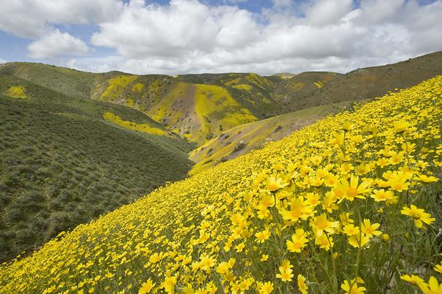 Carrizo Plain National Monument, CA