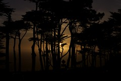 Evening through the Cypress Trees