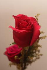 IDia de San Valentin