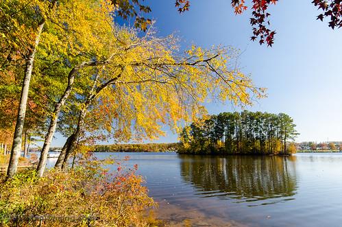 midlothian autumn foliage lake fall landscape autumnfoliage fallfoliage virginia chesterfieldcountyvirginia midlothianvirginia chesterfieldcounty lakewalk island swiftcreekreservoir d7000 dailyphoto pauldiming reservoir unitedstates us