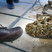 This is what happens to a shoe dangling in a lake infested with Quagga Mussels, within 6 months. Lets not let this happen