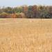 Malvern Hill Battlefield