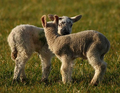 Dry weather, sunny days, spring flowers and new born lambs: spring has arrived! :-)