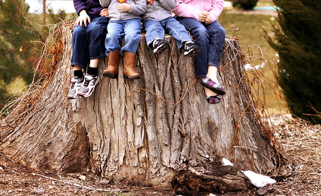 Bench Monday: We Found a Huge Tree Stump Edition.