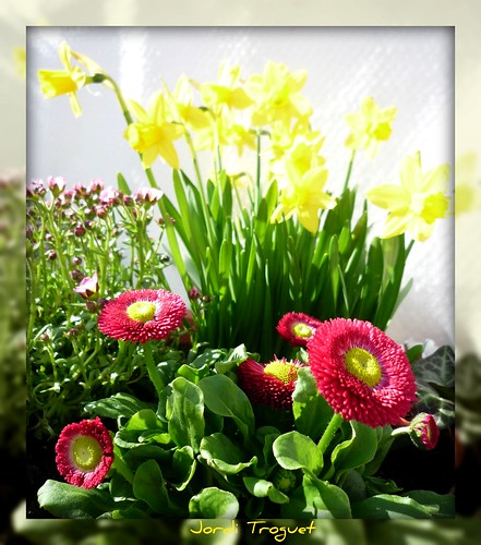 Primavera en ULM