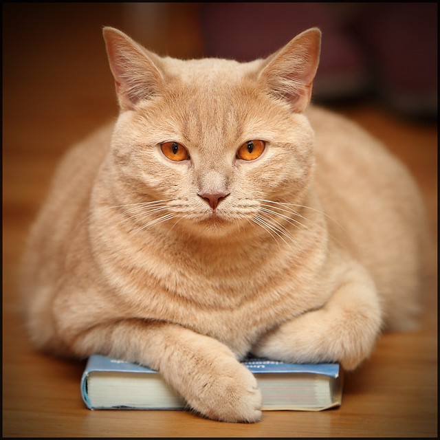 READING A BOOK..