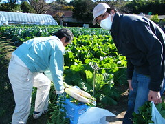 flower(0.0), garden(0.0), produce(0.0), agriculture(1.0), farm(1.0), gardener(1.0), food(1.0), farmworker(1.0), plantation(1.0),
