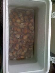 Clean clams
