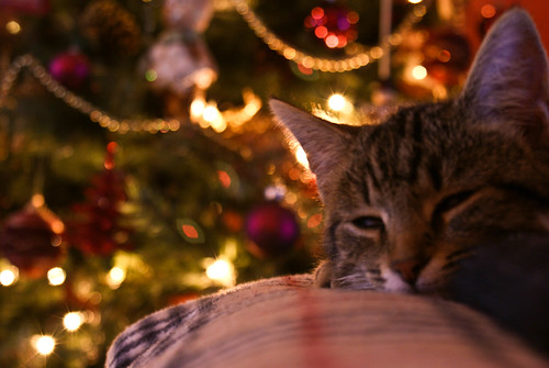 Wake up Kitty, it's christmas