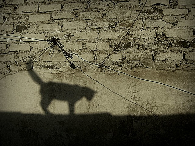 cat' shadow