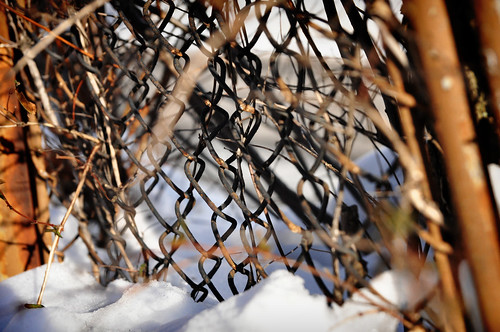 Old snow fence.