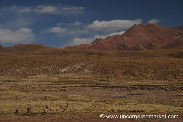 Red Rocks and Vicunas - Salar Tour, Bolivia