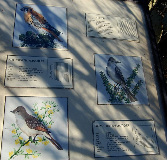 Tohono Chul Birds Walking Tour