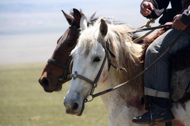 Goat Polo, Kyrgyzstan
