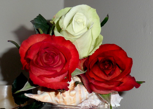 Roses and Conch Shells by E.J.