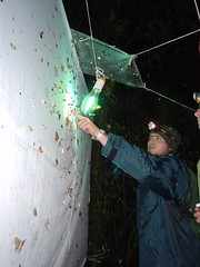 Collecting moths