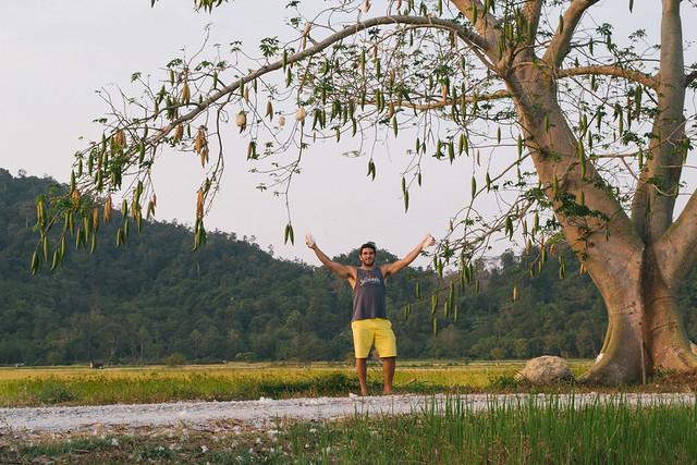 Under the Kapok Tree