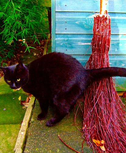 My Black Cat and My Broomstick