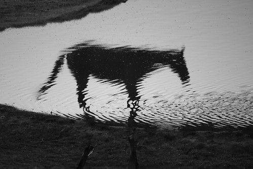 Reflected horse