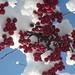 cherries in snow by Jake & Bridget & Lucy & Alice