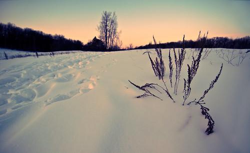 park winter sunset snow cold tree nature minnesota forest dark bush lowlight branches ultrawideangle tracksinsnow fadedcolor mahtomedi nikond90 brennananderson tokina1116mmf28 katherineabbottpark