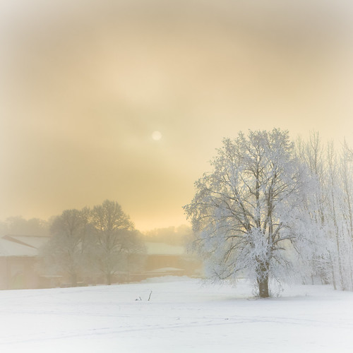 morning trees houses winter sky cloud sun house mist snow tree nature fog clouds sunrise sweden stockholm gärdet djurgården östermalm ladugårdsgärdet