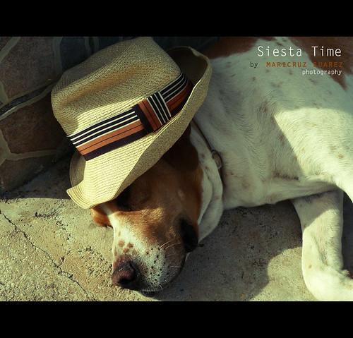 sleeping dog pet sunlight luz sol hat relax peace gorro sleep relaxing perro siesta sombrero nico durmiendo relajacion relajado siestatime calidez mariacruz maricruzsuarez hatsforhaiti