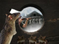 animal, rat, rodent, mouse, fauna, whiskers, gerbil,